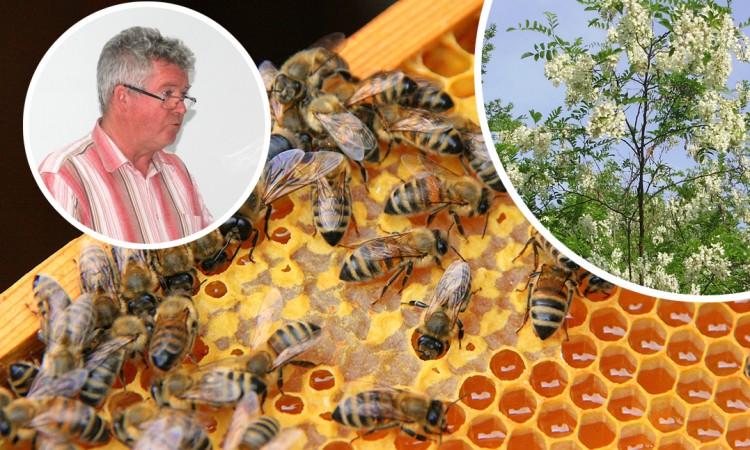 """Pčelarski problemi: Mraz """"pofurio"""" bagrem i ugrozio pašu"""