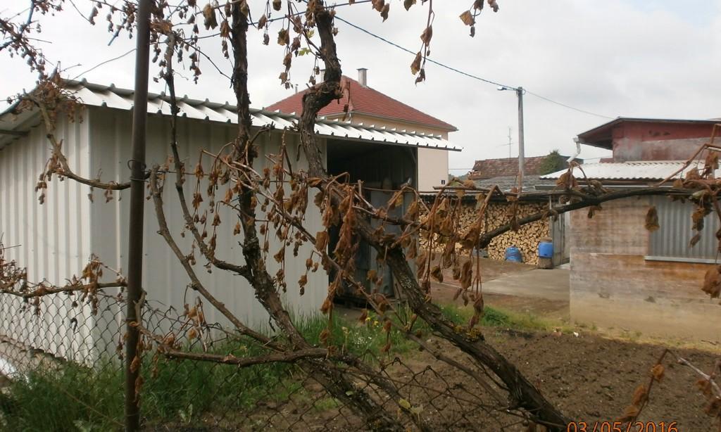 Završene prijave šteta od mraza:   Najviše stradali orasi i vinogradi