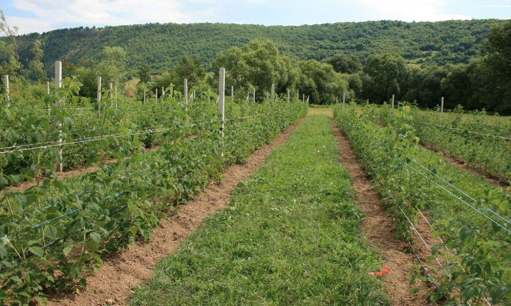 Projekt ruralnog razvoja: Od deset zahtjeva odobreno devet