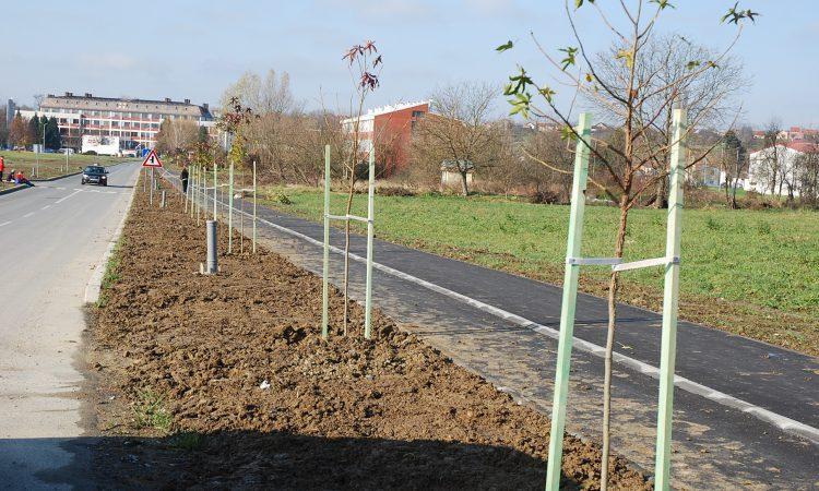 ULICA HRV. POLICIJE IZ DOM. RATA: Posađen novi drvored