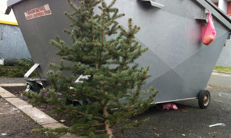 Svoja drvca ćete zbrinuti sami, Komunalac odvozi samo ona ispred višestambenih zgrada