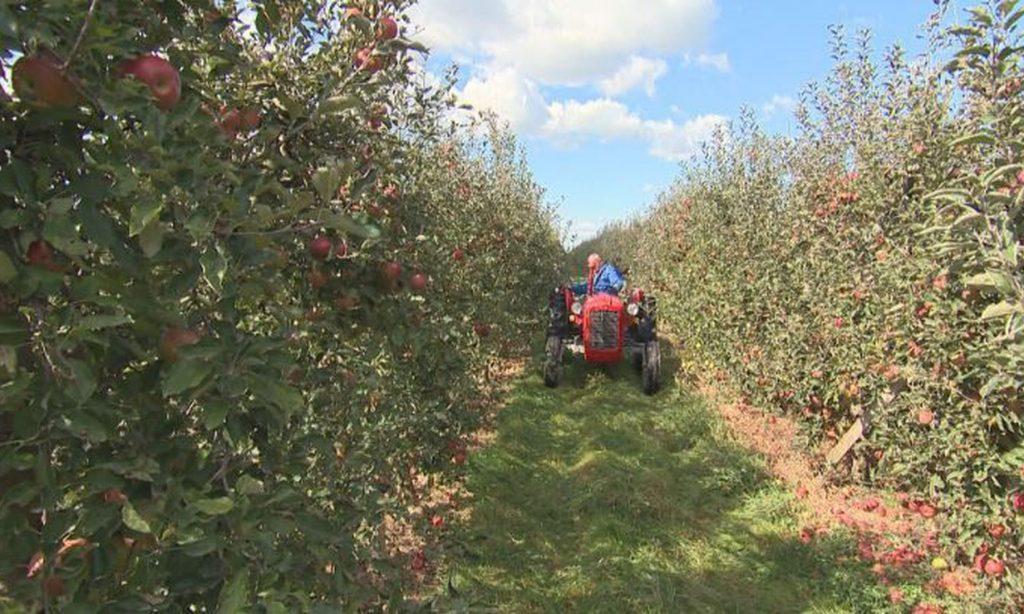 ŽUPANIJA POZIVA Novčane potpore malim poljoprivrednicima