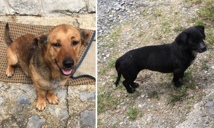 U ULICI SVETOG ROKA Izgubljeni psi čekaju vlasnike