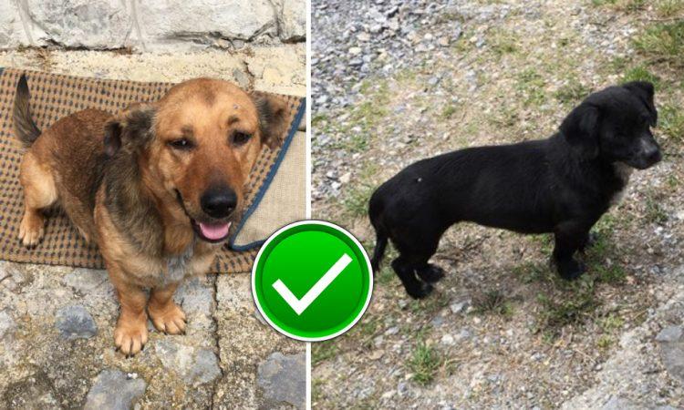 NAKON JUČERAŠNJE OBJAVE Vlasnica preuzela  pse