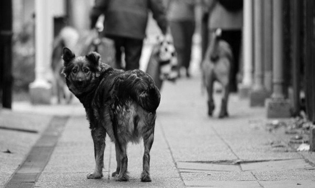 POLICIJA Životinje bez nadzora sve učestalija pojava