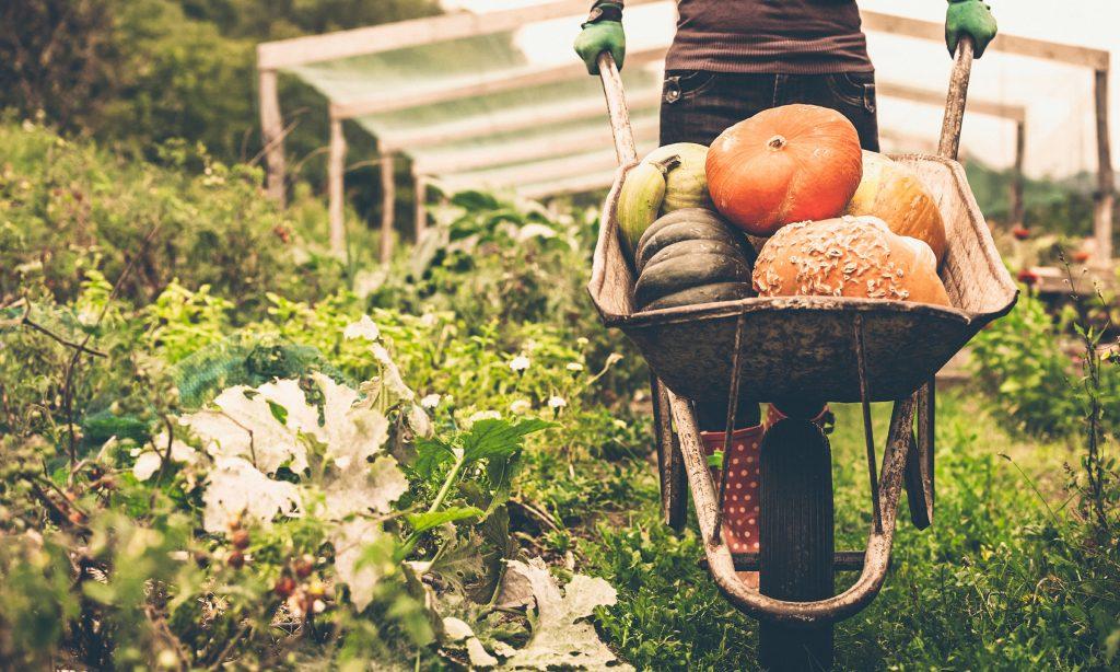 LOKALNA RAZVOJNA AGENCIJA PCP EU dijeli novce malim poljoprivrednicima