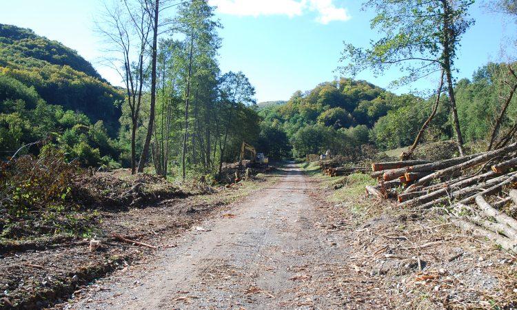 AKUMULACIJA ŠUMETLICA Započelo krčenje šume i šipražja