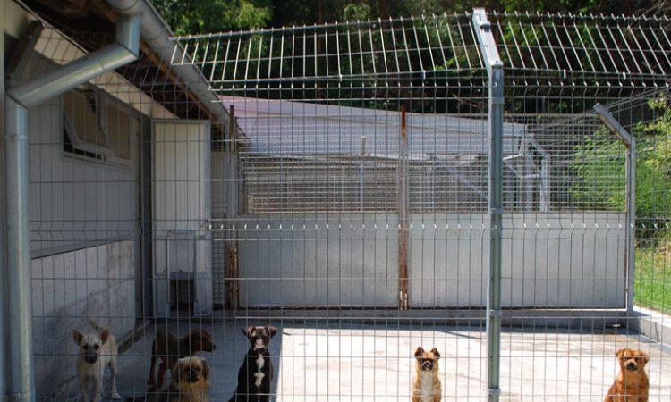 SKLONIŠTE ZA ŽIVOTINJE BUČJE Ponovo udomljavanje u Njemačkoj