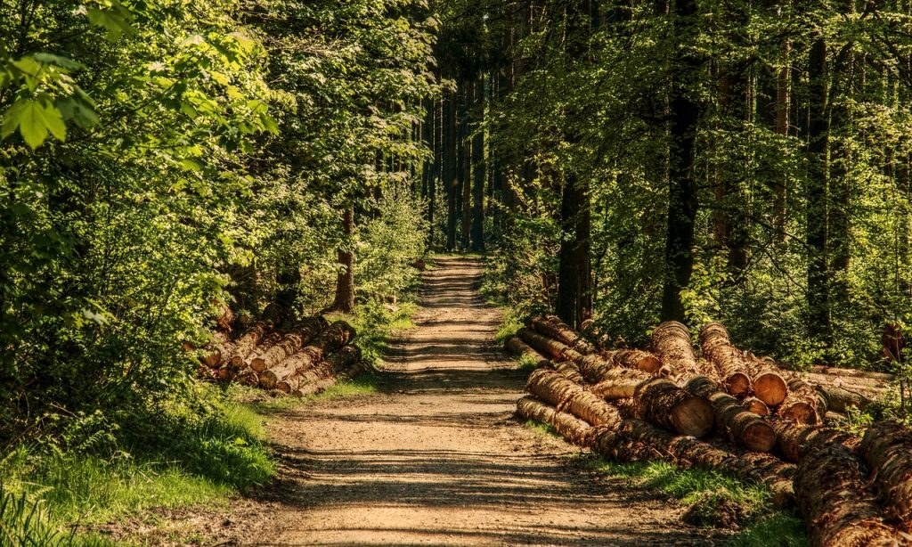 """PODUZETNIČKI CENTAR PAKRAC Raspisan natječaj """"Ulaganje u šumsku infrastrukturu"""""""