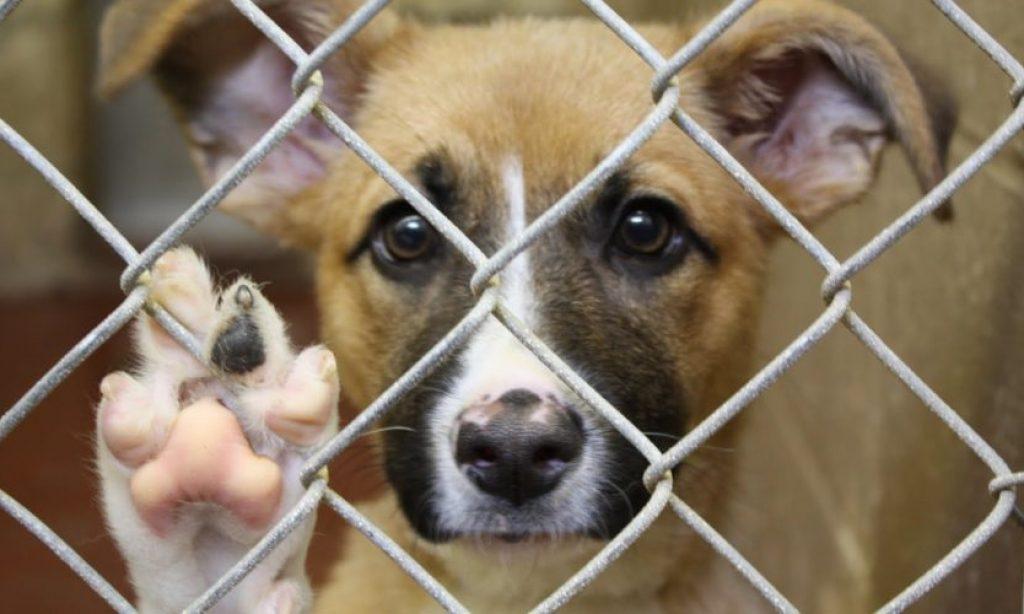 HVALEVRIJEDNA AKCIJA Grad subvencionira udomitelje pasa iz azila Bučje