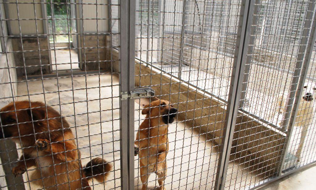 SKLONIŠTE ZA ŽIVOTINJE NA BUČJU Gradska mjera potaknula udomljavanje pasa