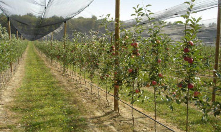 ŽUPANIJA POZIVA Bespovratne potpore malim poljoprivrednicima